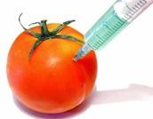 Tomatoe Modified