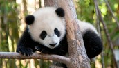This let you help pandas