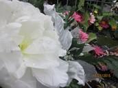 Floral & Seasonal