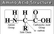 Amino Group