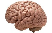 Affects of Drugs on the Brain