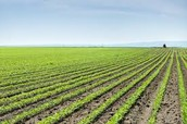 Egypt's Main Crops