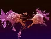 Aumento del riesgo de cáncer