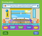 Grow a Plant Interactive