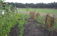 SAE Garden