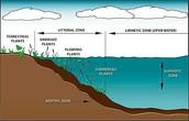 Diagram Of A Lake Underwater