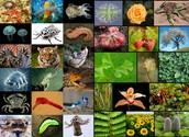 Les different types parmi les espèces