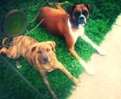 My dogs