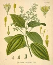 Botanical Information