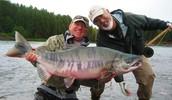 slender salmon