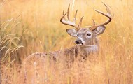 Me and my dad go hunting in the fall for whitetail deer