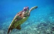 Swimming in Mediteranian