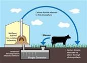 Biogas for the BETTER