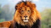 que les pasaria a los leonessi asen un ecosistem terrestre se murieran las plant