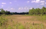 This is another grassland
