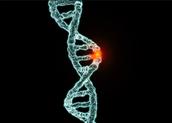 Mutated Gene