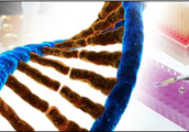 What is the role of DNA in Biotechnology