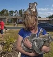 Australian Animal Rescue