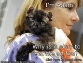 Cruelty to Kitties