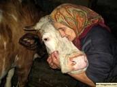 Suma y profundiza más en tu vínculo con los animales