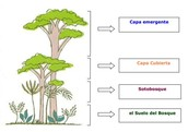 World Languages Elementary STEM Curriculum Modules from Maryland DOE