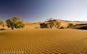 Desert characteristics