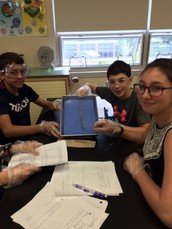 Mrs. Grimaldi's students dissect worms
