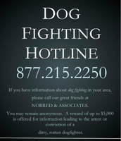 Animal Hotline