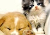 We're also pet friendly!