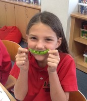 Bean Pods; Investigation 1
