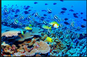 An Amazing Reef