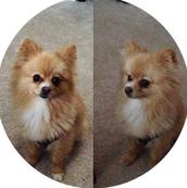 Teddy (puppy years)