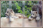 And all the big cats!
