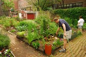LOCAL COMMUNITY GARDEN OPEN SOON!