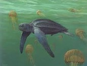 Leatherback with jellyfishes