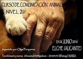 ELCHE (Alicante) NIVEL 2 ANIMAL COMMUNICATOR