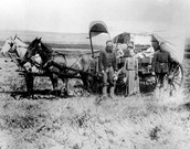 The Covered Wagon of the Great Western Migration