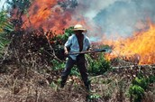 Burning of trees