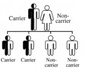 "Inheritance with one ""carrier"" parent and one ""non-carrier"" parent"