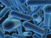 ¿ Qué son las bacterias ?