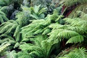 """""""And the ferns never fade"""""""