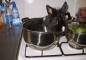 recette de lapin