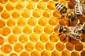 Honeycomb  - Tessellation's