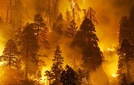 Forest Fires