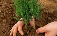 Be Green Tree Planting