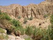 רמת המדבר