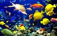 Different  Types of Fish Swimming Around