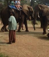 #1 ride an elephant