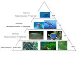 organisms in the enviriment