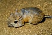 Animals in Death Valley
